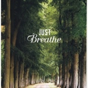 image of trees and two words: just Breathe